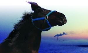 horsesoffukushima