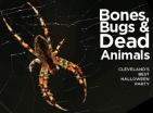 Bones Bugs