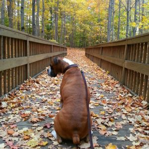 20151024_141238_Nena on bridge