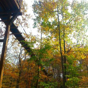 20151024_150235_Canopy