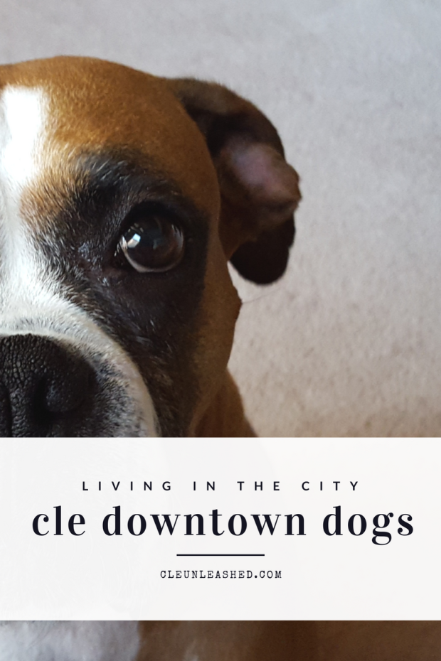 Living in the City_Cleveland downtown dogs